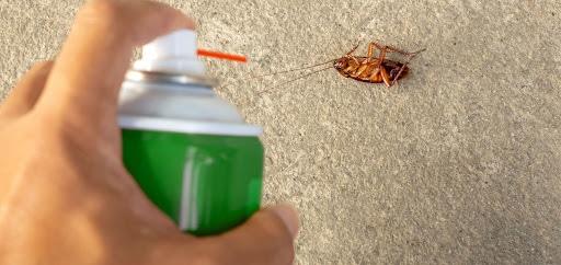 شركة مكافحة الحشرات بالدمام