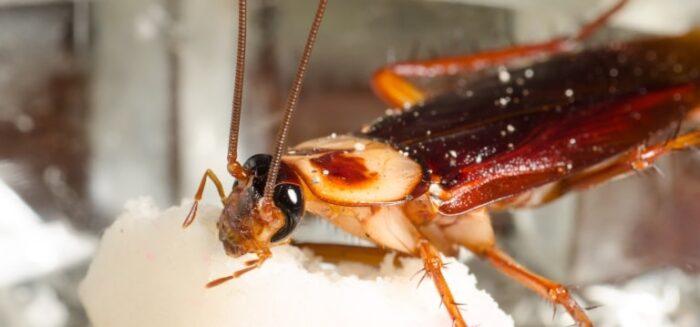 مبيد حشري لجميع الحشرات